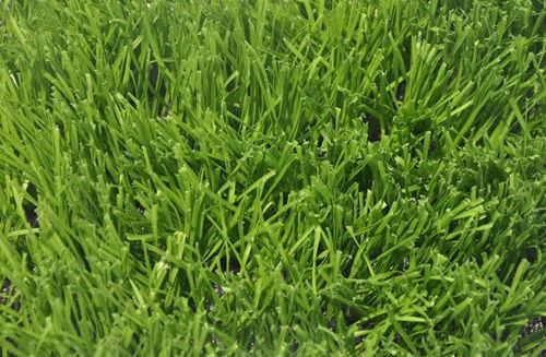 金邦体育:人工草坪