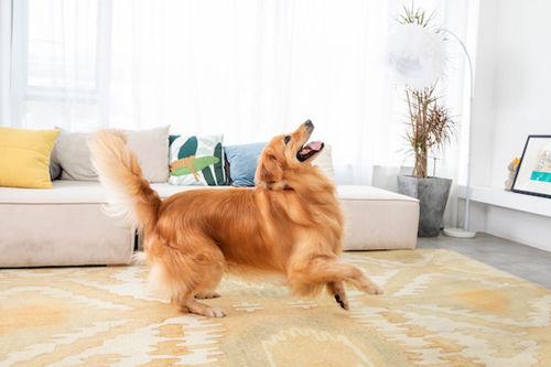 小米再次出手猫狗品牌,加速布局宠物智能家居